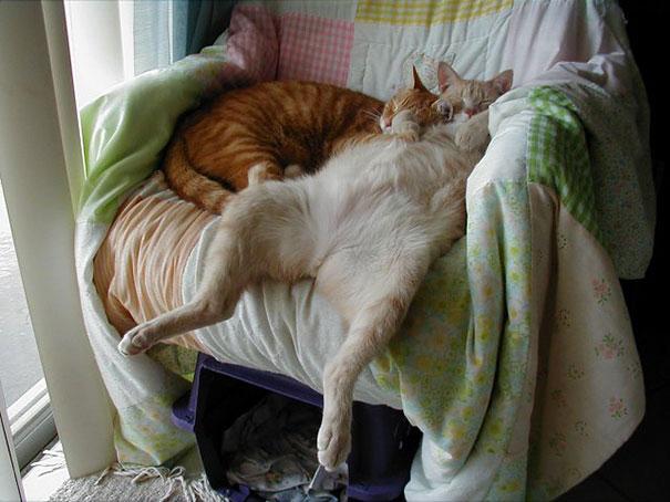 Коты, спящие в странных позах 4
