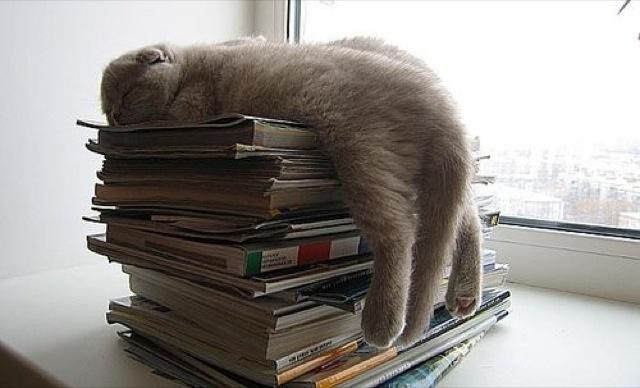 Коты, спящие в странных позах 5