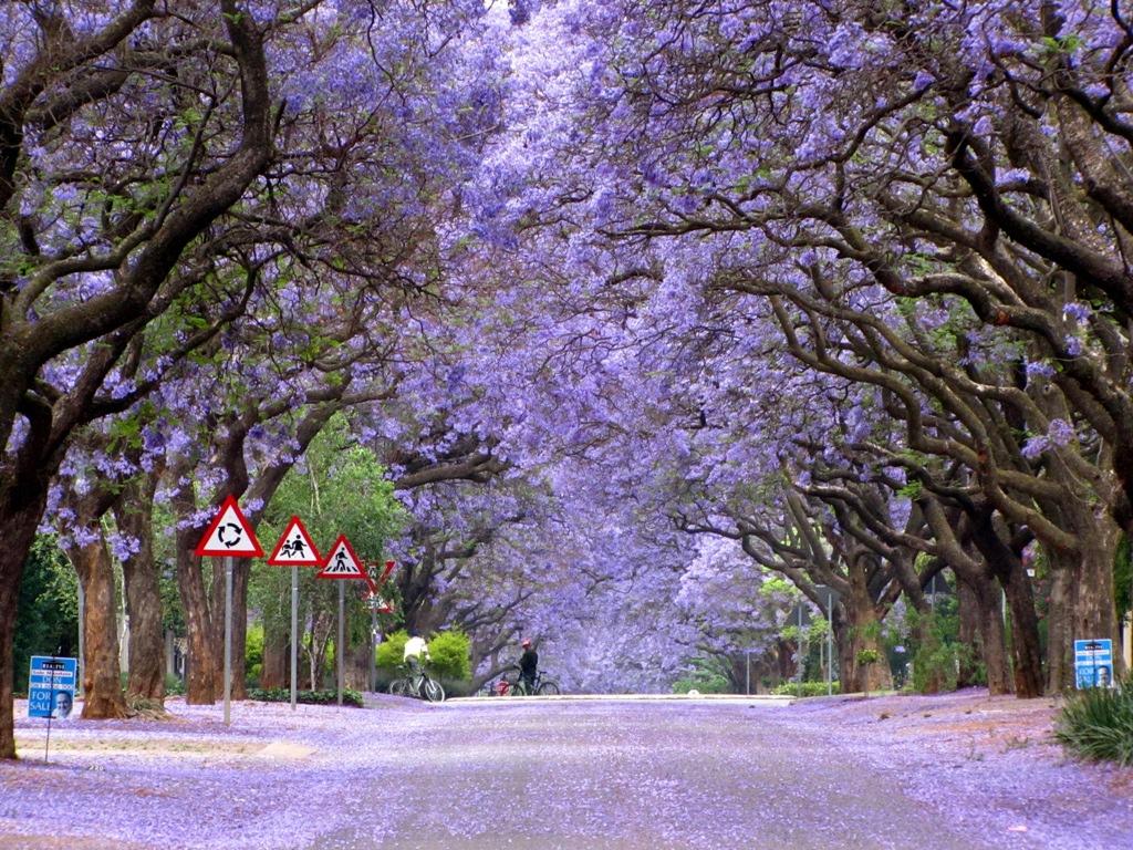 тоннель из деревьев в Африке