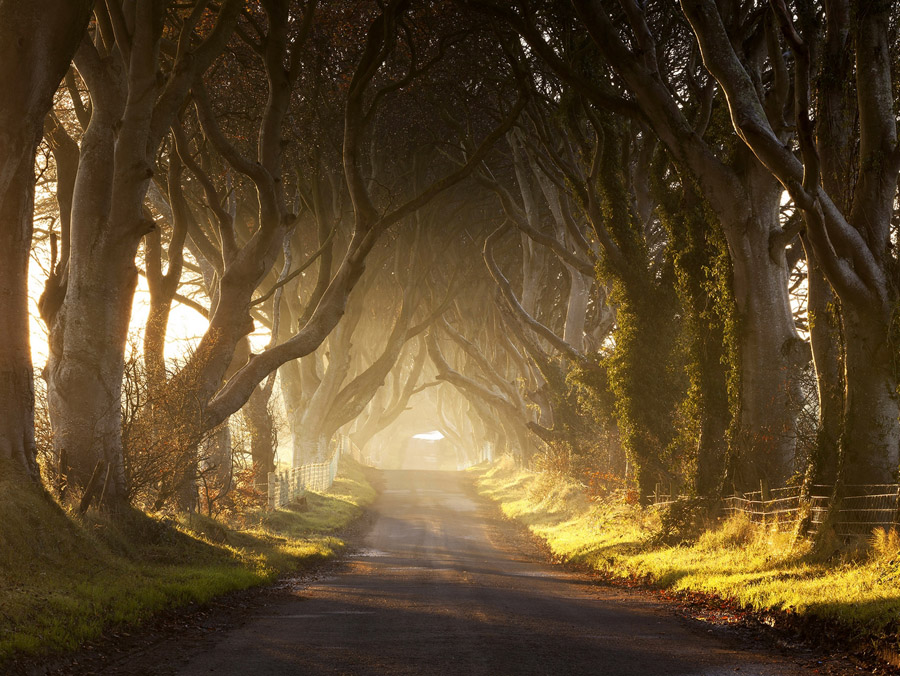 Дарк Хеджес в Ирландии