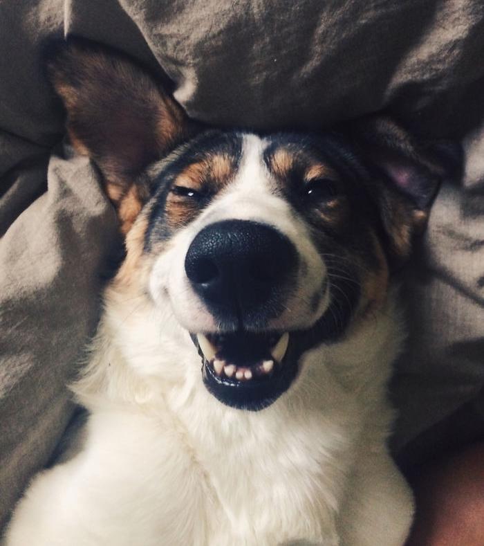 Улыбающаяся собака, фото 14