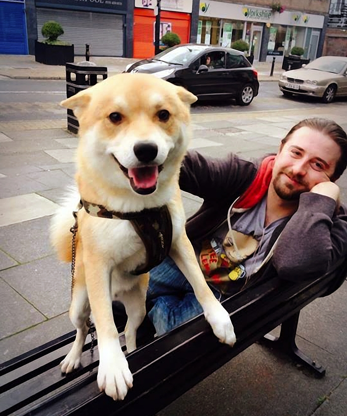 Улыбающаяся собака, фото 3