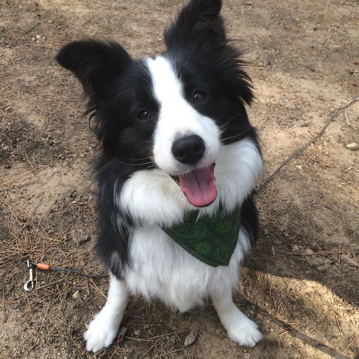 Улыбающаяся собака, фото 6