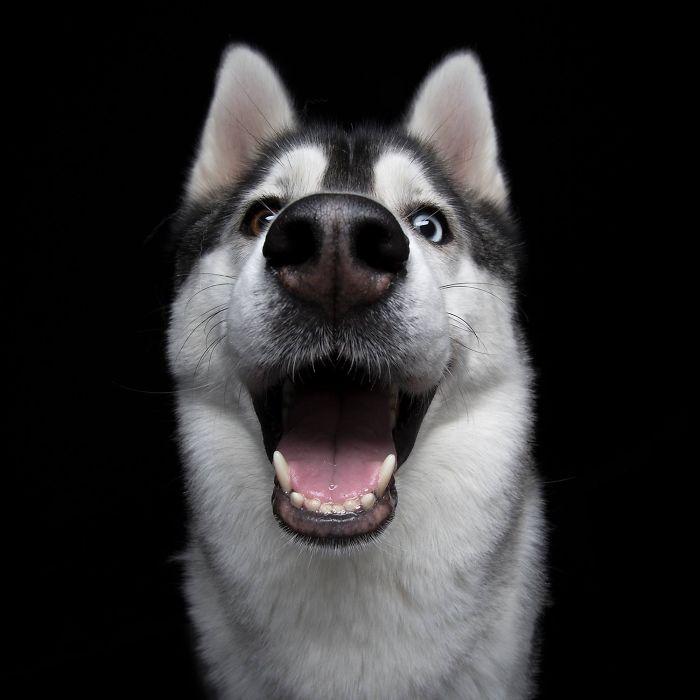 Улыбающаяся собака, фото 7