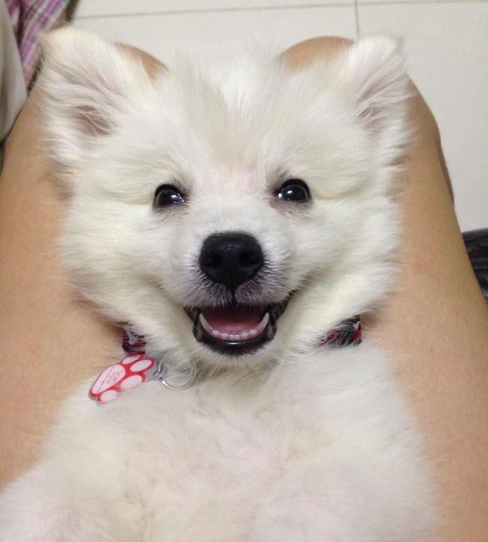 Улыбающаяся собака, фото 8