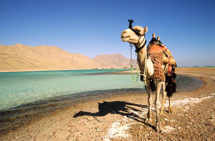Путешествие и отдых в Египте