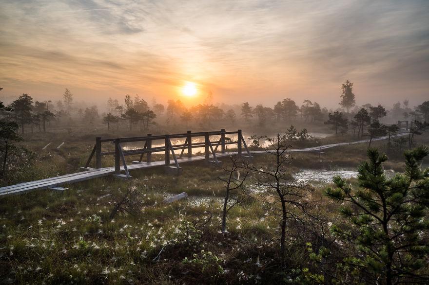 Болота в национальном парке Кемери (Латвия)