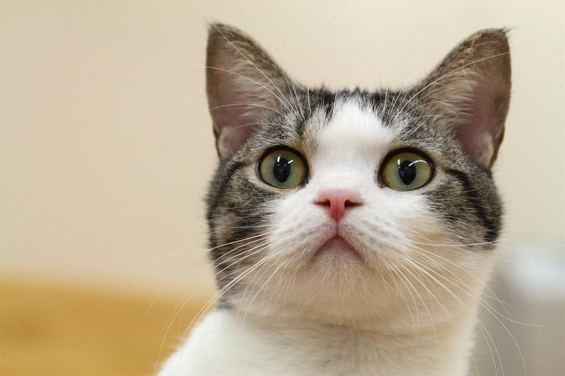 Стоит ли заводить кошку в доме