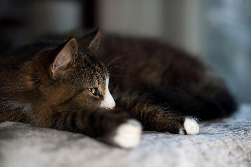 Кот спит на кровати