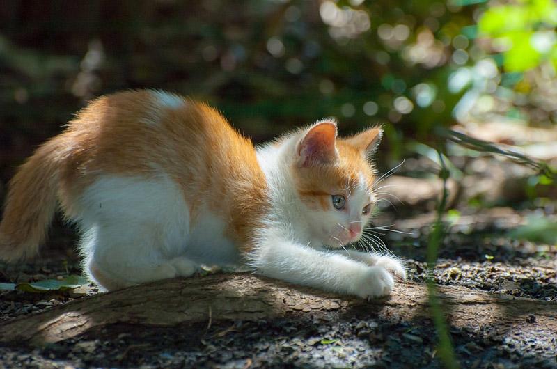 Котенок играет на улице