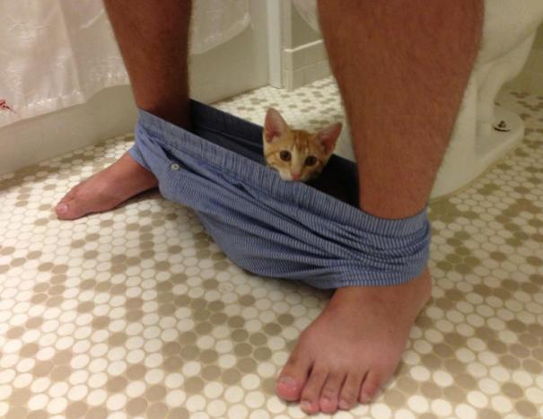 Коты повсюду!