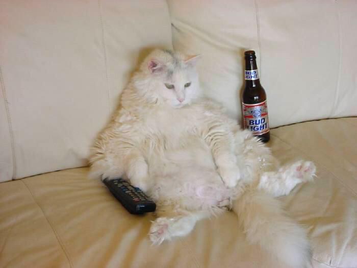 Кот с пультом на диване