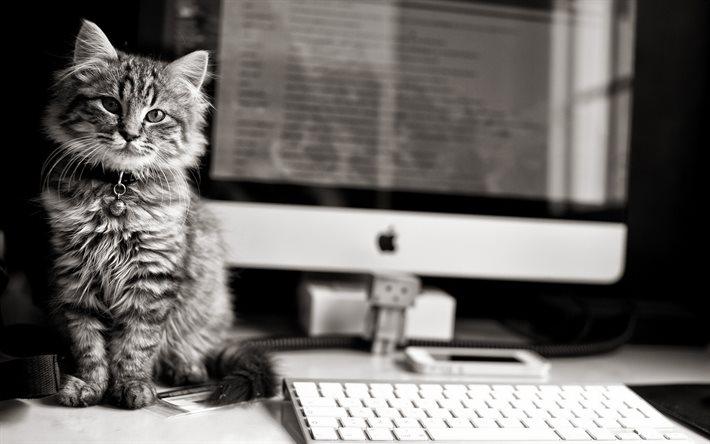 Кот возле компьютера