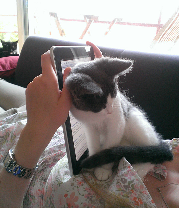 Кот отвлекает от работы