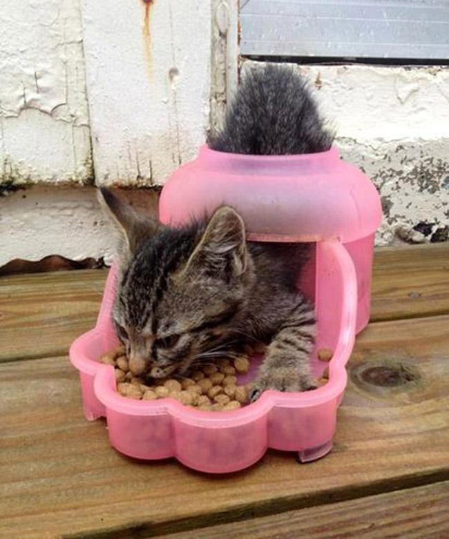 Кошки, которые странно себя ведут 2
