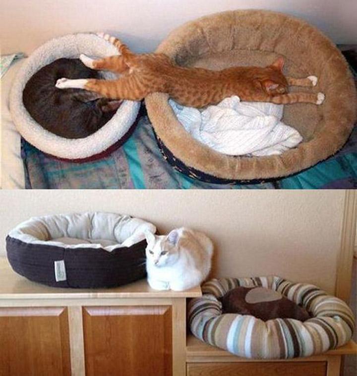 Кошки, которые странно себя ведут 3