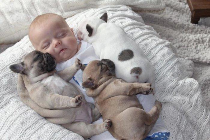 Малыш и щенки фото 2