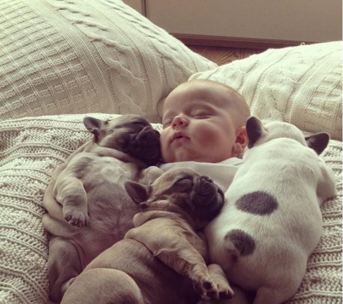 Малыш и щенки фото 4