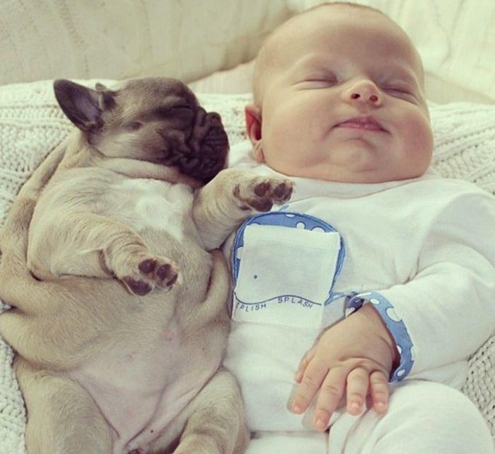 Малыш и щенки фото 5