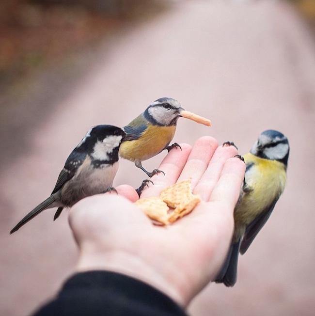 Птички едят с руки