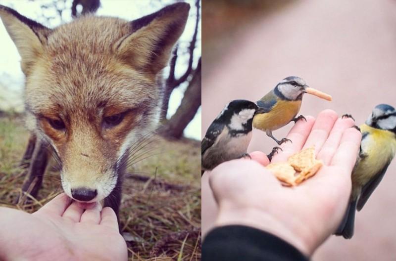 Животные едят с руки
