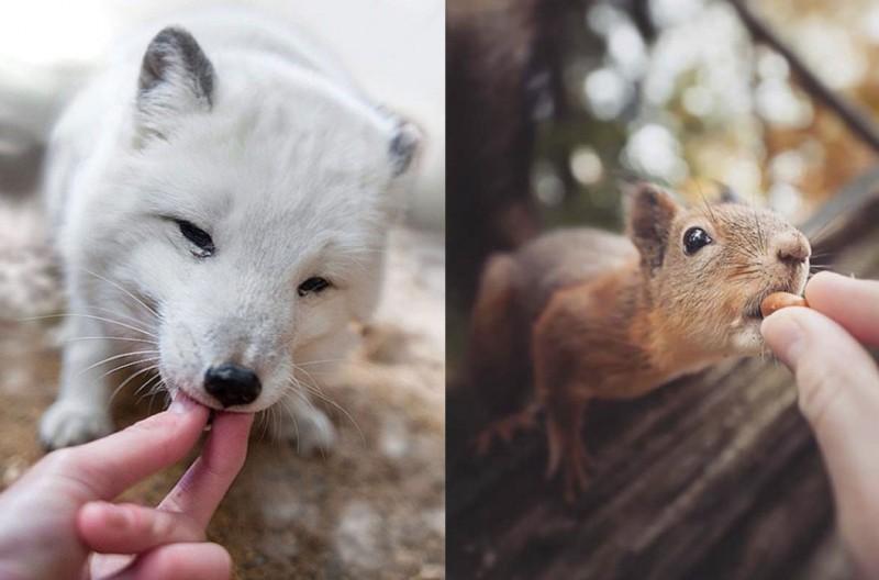 Годуют животны с рук