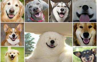 Собаки, которые улыбаются