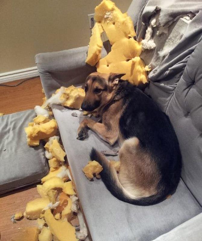 Собака распотрошила диван