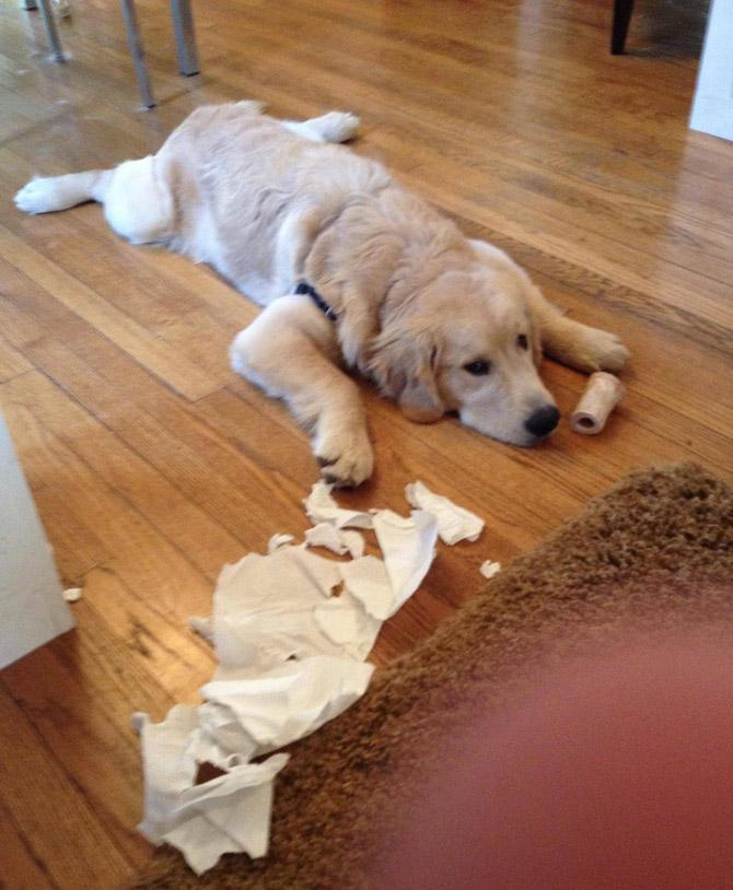 Собака устроила дома бардак