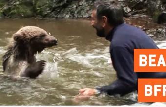 Дружеская драка медведя и мужчины в потоке реки