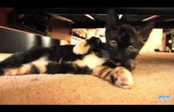 Коты, которые ценят свою частную жизнь (видео)