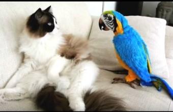 Лучшие моменты общения попугаев и котов