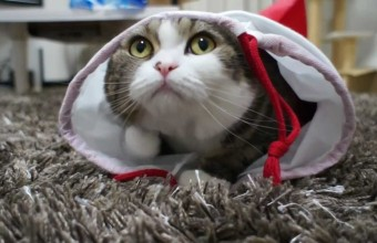 Самый смешной и добрый кот на планете по имени Мару
