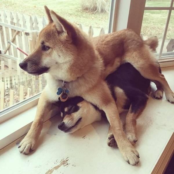 Самые забавные и неуклюжие собаки 2015 года
