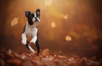 Потрясающая подборка фотографий собак в природных условиях