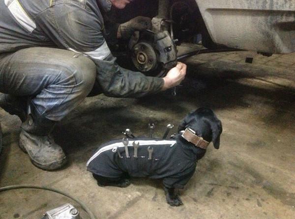 Собака-помощник в автосервисе