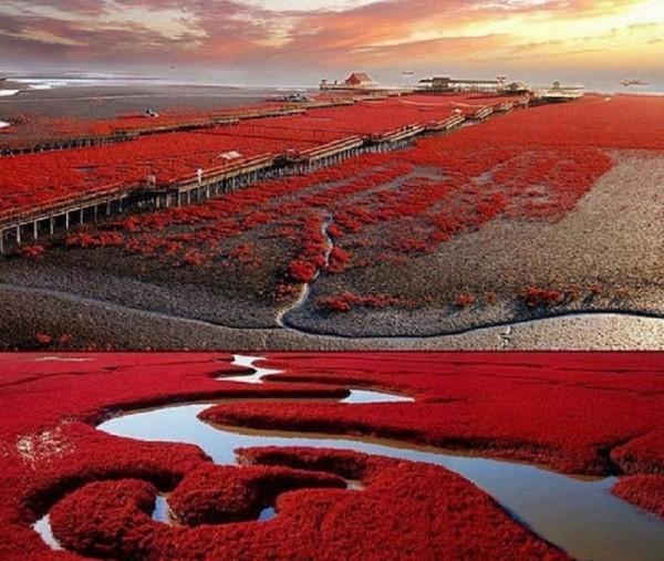 Красный пляж, Паньцзинь