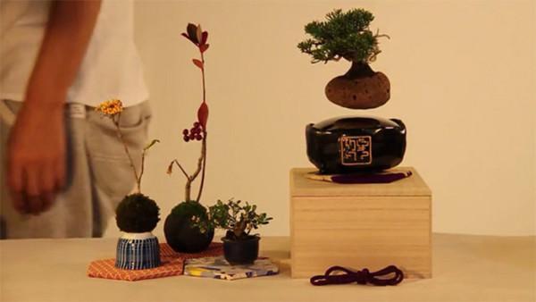 дерево бансай