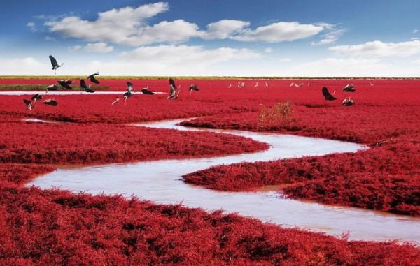 красный пляж, красвый китай