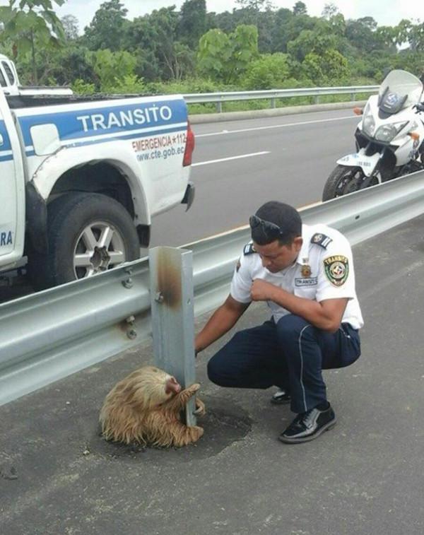 ленивец у дороги