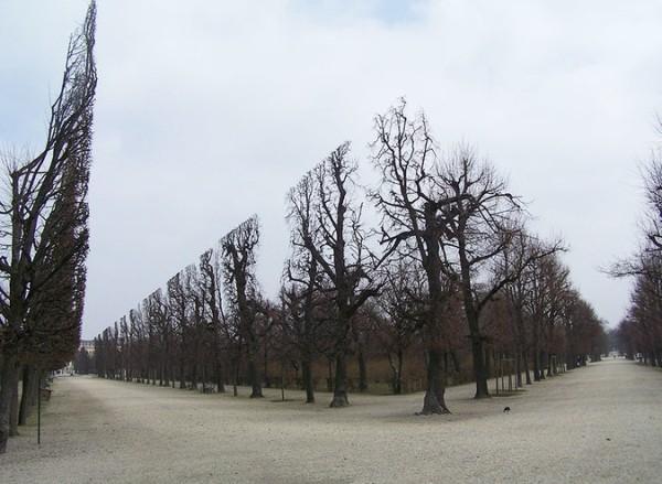 trees_park1