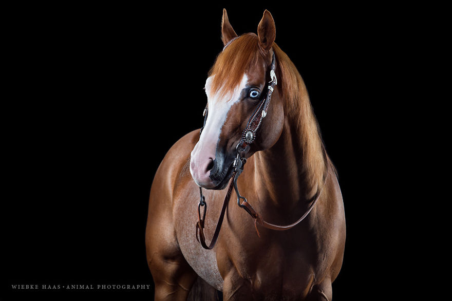 Instead-Of-Getting-A-Boring-Office-Job-I-Followed-My-Dream-To-Become-A-Horse-Photographer2__880
