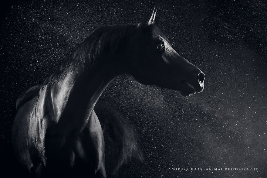 Instead-Of-Getting-A-Boring-Office-Job-I-Followed-My-Dream-To-Become-A-Horse-Photographer6__880