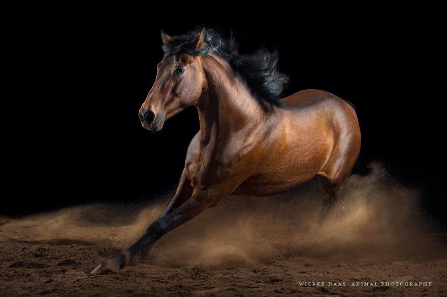 Pferdefotografie-Studio_Monti-CE9Q4160-Remastered__880