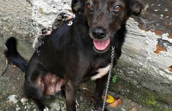 dog-adopts-opossums-baby-orphans-stephanie-maldonado-9