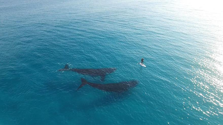 фото китов в австралии