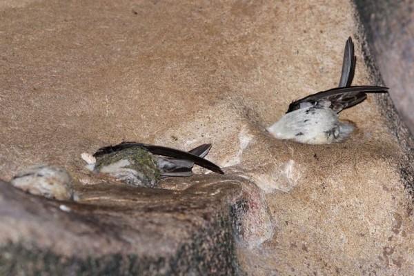 гнезда в суп