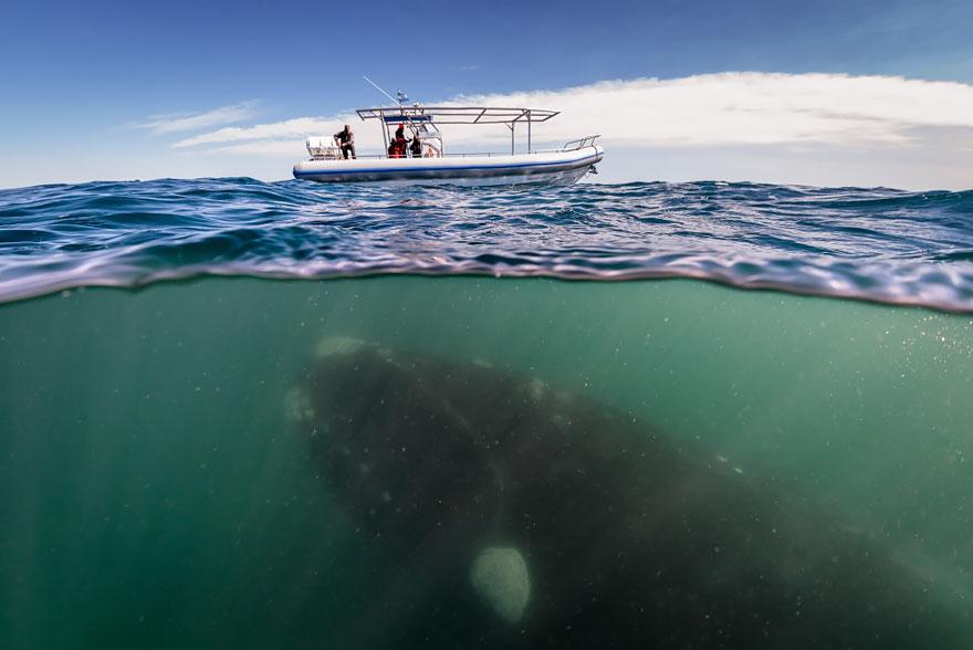 кит и лодка
