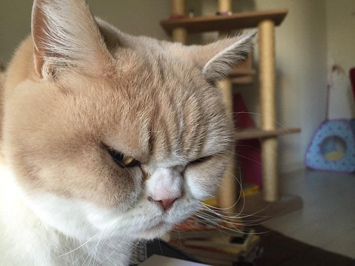 кошка злодей