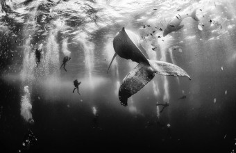красивые фото китов
